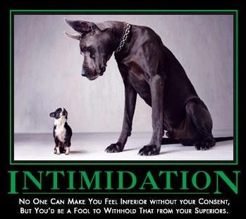intimidation grote hiond - kleine hond 50 procent